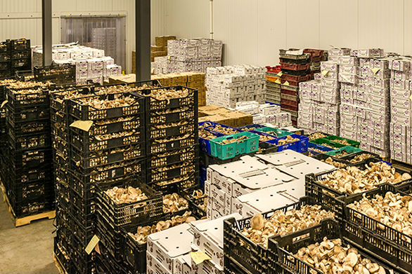 KSS Mushroom Sales
